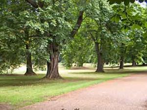 Driveway of Ascott House, Wing Buckinghamshire