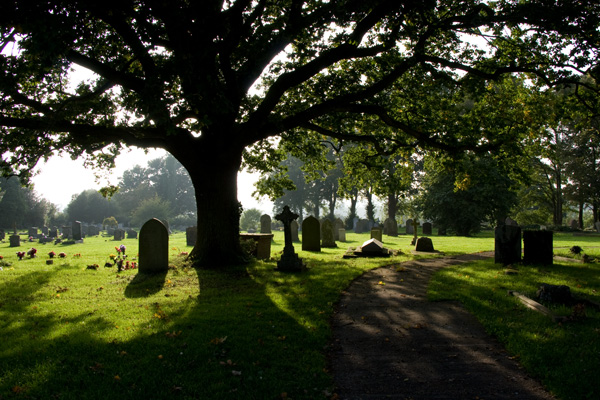 All Saints graveyard with oak tree